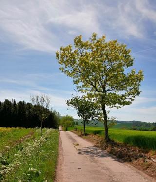 Tree-lined way