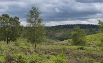 Ominous clouds over Cannock Chase