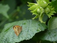 Butterfly and hazelnuts