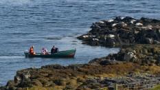 Seal boat