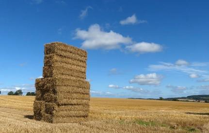 Harvest's in