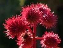 Strange red plant
