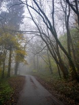 Down the lane, through the woods