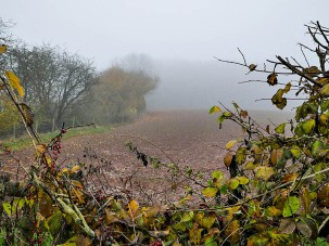 A gap in the hedge
