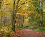 Walking in beech woods