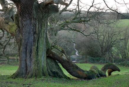 A fallen branch