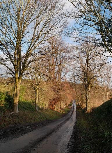 The lane (again)