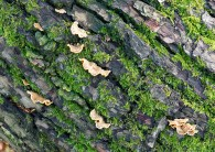 Patterns in the bark
