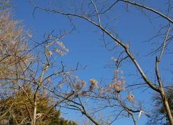 Against a blue sky
