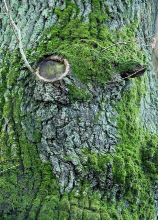 Do I see a face?