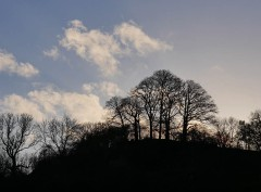Trees on Round Hill