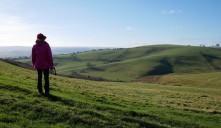 Velvet grassland