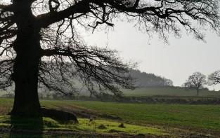 Skyline woodland