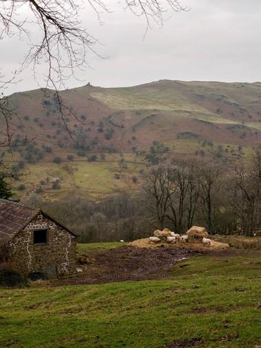 Sheep at Cwms Farm...