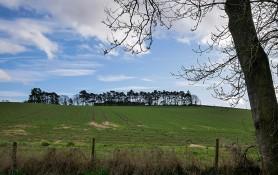 Hilltop treeline