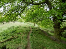 Pit-heap oak