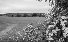 Distant woodland