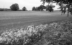 Field's margin
