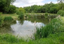 The fishing pool