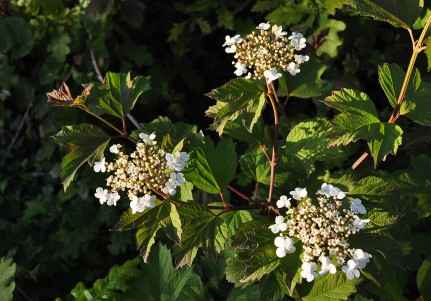 2011: in the hedgerow