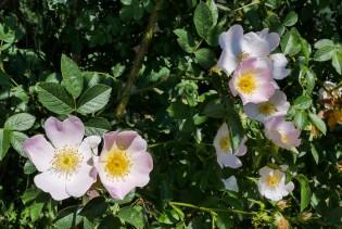 A floral beginning