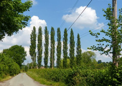 Those trees again...