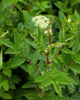 The meadowsweet will soon be out