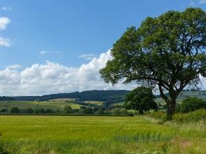 A more conventional fieldscape