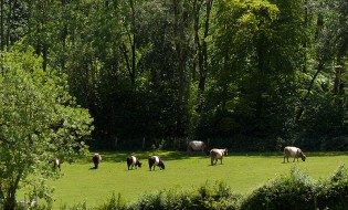 There are the belties!