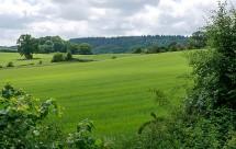 Velvet fields