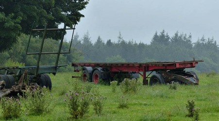 Damp pastures