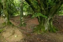 Magical ancient woodland