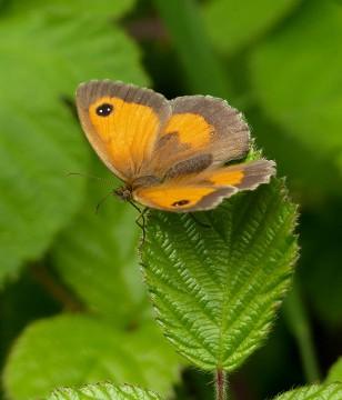 ...and another on bramble leaves