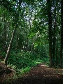 Ned's Lane woodlands