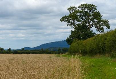 Wheat and Wrekin