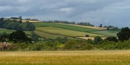 Patchwork fieldscape