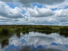 The pond (obligatory pause)