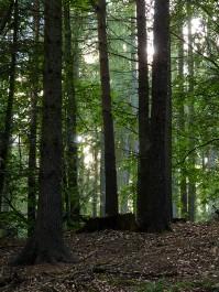 Ned's Lane woodland