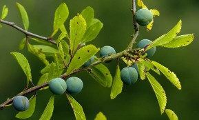 These sloes are slower