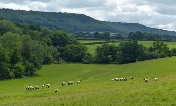 Sheep pastures below the Edge