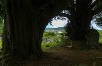 ...through the yews