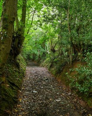 Wooded lane