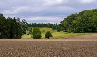 Crop and pasture