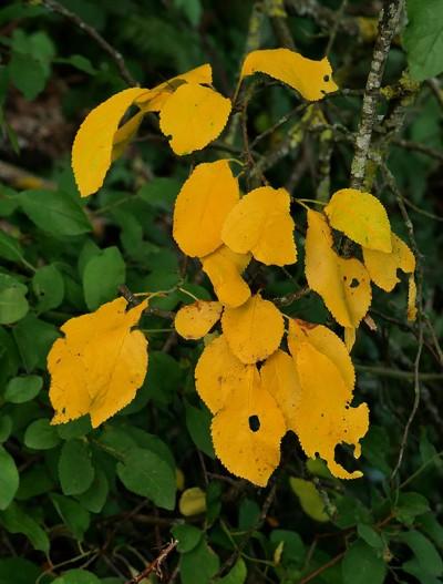 Distinctly autumnal