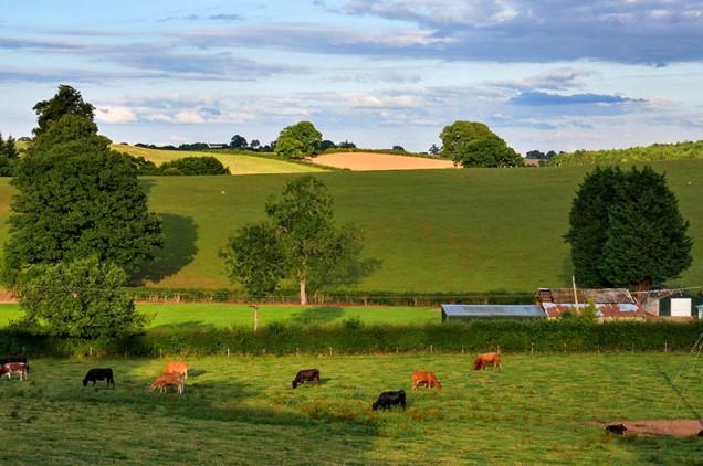 Peaceful pastures