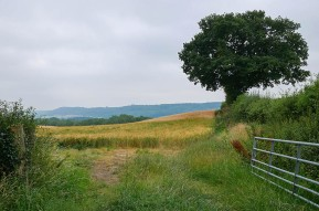 Barley below the Edge