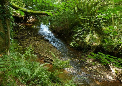 Linley Brook