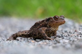 Here's Mr Toad!