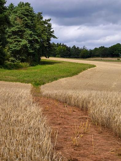 Field's edge
