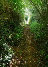 Between high hedges